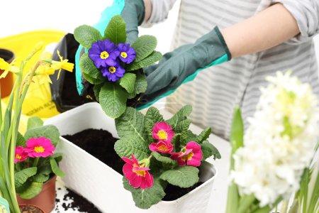 Planting plants in pots