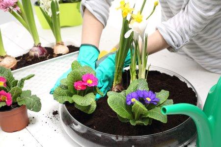 Daffodil, Spring flower arrangement,