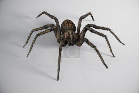 Big Crawling Spider.