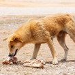 Close up dirty stray dog looking at the bone on gr...