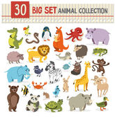 Big  collection of cute wild animal vector illustration on whit