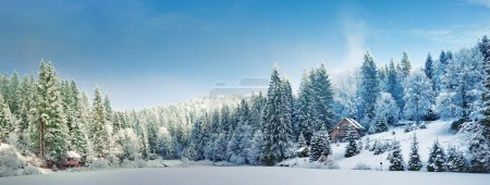 Photo for Ukraine, winter forest in the Carpathian Mountains, pine trees covered with snow,  the resort area near Mezhgorye of Tourism Complex Lake Vita - Royalty Free Image