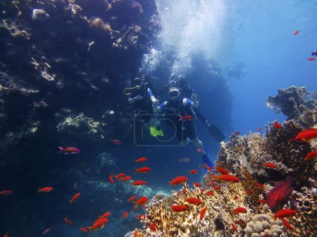 Divers visiting the coral reef  in the bay of Ras ...