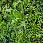Vertical Garden...