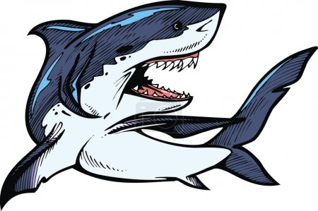 Wild shark isolated on the white background...