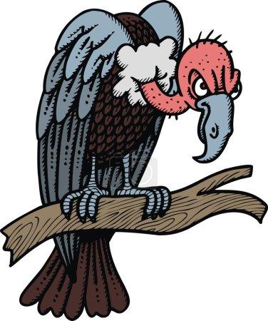 wild vulture