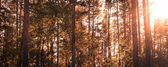 Forest landscape in fall, panoramic cut in Instagram style proce