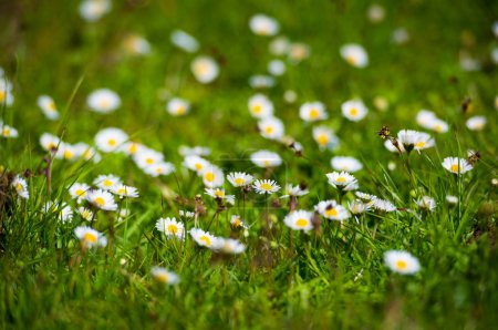 Foto de Flowers and grass as background. Beautiful natural landscape - Imagen libre de derechos