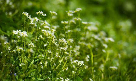 Foto de Flores de primavera como telón de fondo. Hermoso paisaje natural - Imagen libre de derechos