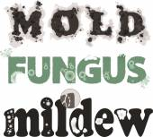 Mold fungus and mildew