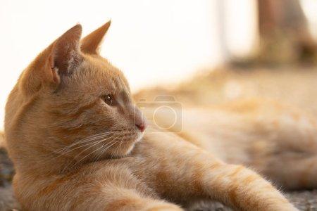 Photo pour Chat se reposant au soleil - image libre de droit