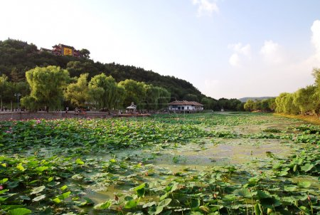 Pond overgrown with water lilies in the historic park near Beijing