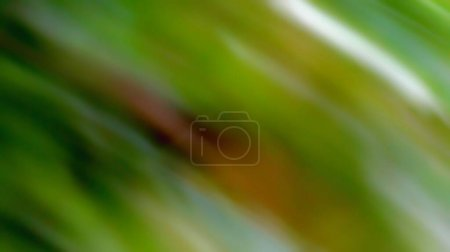 A Blurry Natural Camo Abstract Background...