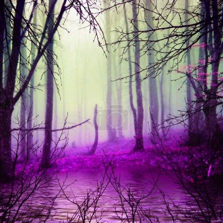 Photo pour Beau paysage naturel. forêt et brouillard - image libre de droit