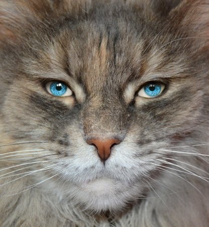 Cat with human eyes.