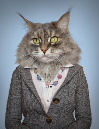 Photo pour Chat dans les vêtements . - image libre de droit