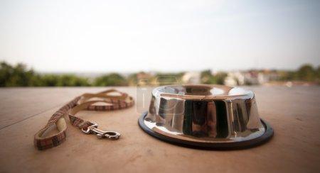 bowl and collar