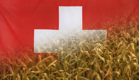 Switzerland Nutrition Concept Corn field with fabric Flag