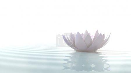 Photo pour Fleur de lotus zen dans l'eau éclairée par la lumière du jour sur fond blanc - image libre de droit