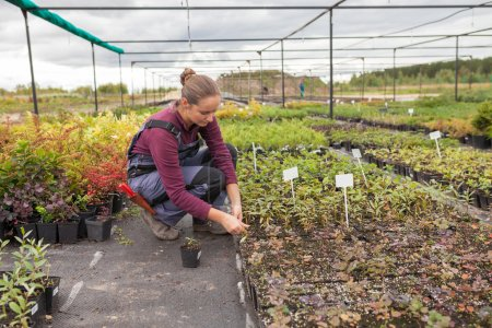woman gardener transplants and rearranges potted plants,