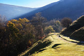 Road in Carpathians mountains