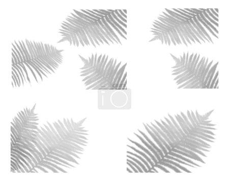 Illustration pour Ensemble d'effets d'ombre transparents pour le branding. Doublure ombragée pour les maquettes de présentations.L'ombre des plantes tropicales pour des effets de lumière naturelle. - image libre de droit
