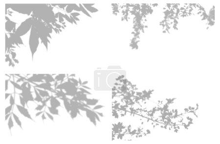 Illustration pour Ensemble d'effets d'ombre transparents pour le branding. Doublure ombragée pour les maquettes de présentations.L'ombre des branches d'arbres pour un effet de lumière naturelle. - image libre de droit