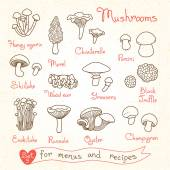 Set drawings of mushrooms for design menus recipes and packages product Vector Illustration