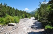 Fast mountain river, on the banks of a pine forest