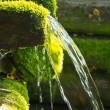 Source of natural mineral water overgrown with mos...