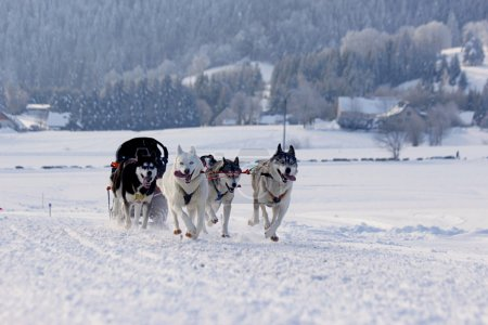 Group of sled dogs running through lonely winter l...