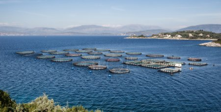 Fish Farm with floating cages