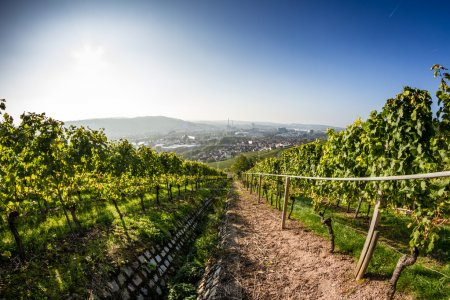 City Vineyard (1)