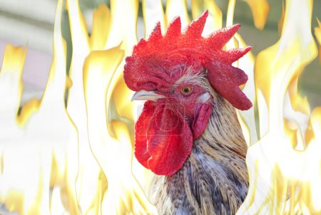 Close-up of cockhead in flames, fire rooster eastern calendar.