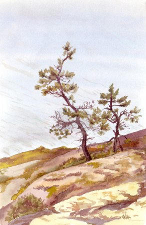 Watercolor painted view with two pines near water