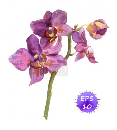 Illustration for One isolated flower of orchid, hand drawing watercolor - Royalty Free Image
