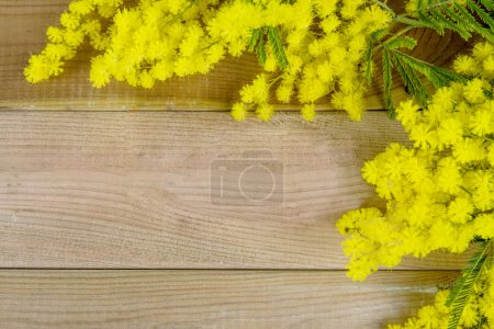 Photo for Mimosa on the wood background - Royalty Free Image