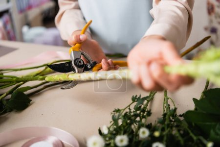 Close up view of florist with secateurs cutting stalk of plant near chrysanthemums on desk on blurred foreground