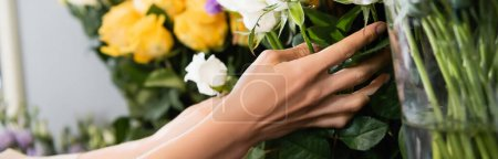 Cropped view of florist caring about stalks of white roses with blurred flowers on background, banner