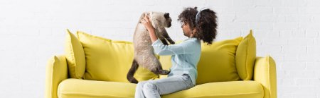Photo for Side view of curly african american girl holding and looking at siamese cat, while sitting on sofa at home, banner - Royalty Free Image