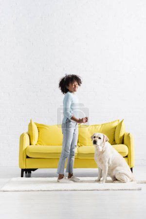 Photo for Labrador sitting near african american girl laughing, while standing on white rug at home - Royalty Free Image