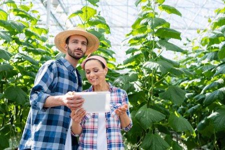agriculteur en chapeau de paille montrant tablette numérique à un collègue afro-américain souriant en serre