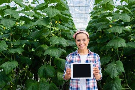 Photo pour Souriant agriculteur afro-américain montrant tablette numérique avec écran blanc près de plantes de concombre en serre - image libre de droit