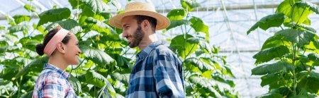 Photo pour Vue latérale des fermiers interracial souriants parlant en serre, bannière - image libre de droit