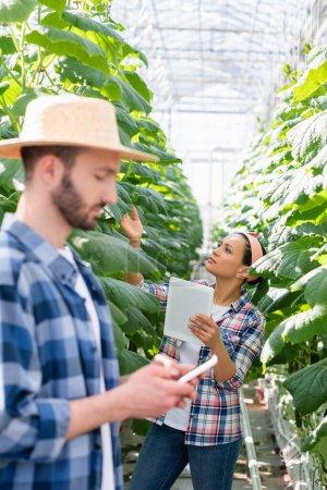 Afrikanerin mit digitalem Tablet kontrolliert Pflanzen in der Nähe von Bauern mit Smartphone im unscharfen Vordergrund
