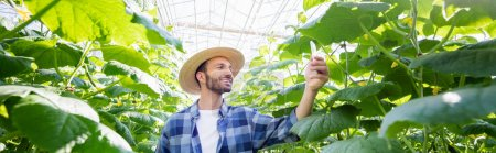 smiling farmer taking picture of cucumber plants in glasshouse, banner