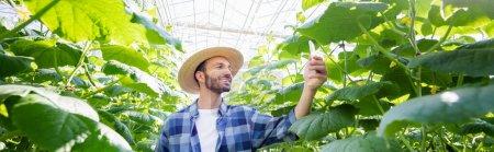 fermier souriant prenant des photos de concombres en serre, bannière