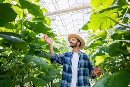 Photo for Happy farmer in straw hat and plaid shirt checking cucumber plants in greenhouse - Royalty Free Image