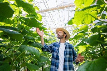 fermier heureux en chapeau de paille et chemise à carreaux vérifier les plantes de concombre en serre