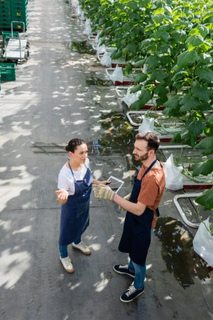 high angle view of interracial farmers pointing with hands while talking in greenhouse